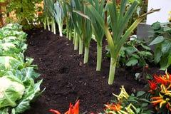 Jardim home com crescimento dos legumes frescos Foto de Stock