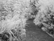 Jardim, infravermelho imagem de stock royalty free
