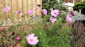 Jardim inglês do país Fotografia de Stock