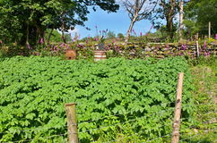 Jardim irlandês da batata Imagem de Stock Royalty Free