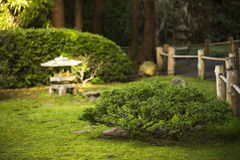 Jardim japonês em Golden Gate Park, San Francisco fotografia de stock royalty free