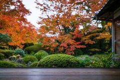 Jardim japonês no outono Foto de Stock
