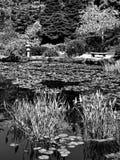 Jardim japonês no parque estadual dos acres da costa Imagem de Stock