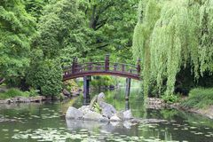 Jardim japonês, plantas exóticas, mola, Wroclaw, Polônia Imagem de Stock Royalty Free