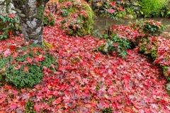 Jardim japonês tradicional na estação do outono Fotografia de Stock Royalty Free
