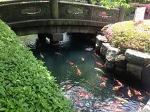 Jardim japonês da carpa: Lagoa de Koi Fotos de Stock Royalty Free