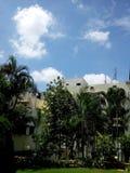 Jardim mais verde e plantas longas do plam Imagem de Stock