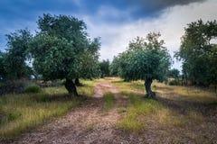 Jardim mediterrâneo, close up o ramo imagem de stock royalty free