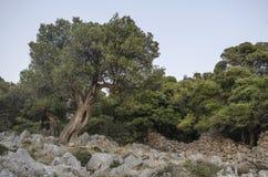Jardim mediterrâneo, close up o ramo fotos de stock royalty free