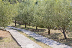 Jardim mediterrâneo, close up o ramo Foto de Stock Royalty Free