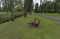 Jardim molhado da manhã após a noite chuvosa em Sabie Imagem de Stock