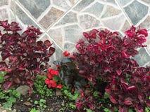 Jardim multicolorido e com texturas do fundo imagem de stock