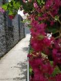 Jardim na rua imagens de stock royalty free