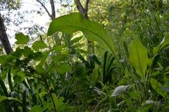 Jardim natural Hortaliças do pátio urbano com as plantas despretensiosos como exemplo da jardinagem da guerrilha Foto de Stock