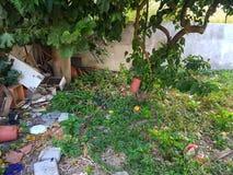Jardim negligenciado fotografia de stock royalty free