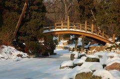 Jardim nevado fotografia de stock royalty free
