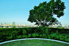 Jardim no telhado Fotografia de Stock