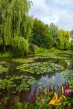 Jardim no verão Foto de Stock