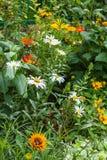 Jardim no verão Fotografia de Stock