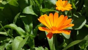Jardim no verão Fotos de Stock Royalty Free