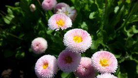 Jardim no verão Foto de Stock Royalty Free