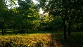 Jardim no verão Fotos de Stock