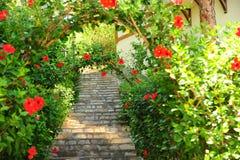 Jardim no verão Imagens de Stock