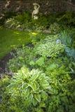 Jardim obscuro com perennials foto de stock