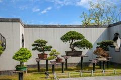 Jardim ocidental delgado dos bonsais do lago Yangzhou Imagem de Stock Royalty Free