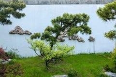 Jardim ocidental delgado dos bonsais do lago Yangzhou Foto de Stock