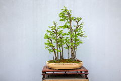 Jardim ocidental delgado dos bonsais do lago Yangzhou Fotos de Stock