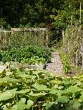 Jardim orgânico: remendo da abóbora Imagem de Stock Royalty Free