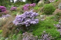Jardim ornamental romântico da mola foto de stock