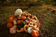 Jardim outonal no Reino Unido abóboras prontas a Hallowen foto de stock