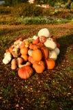 Jardim outonal no Reino Unido abóboras prontas a Hallowen fotografia de stock royalty free