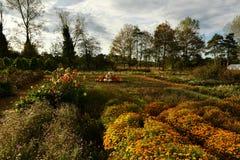 Jardim outonal no Reino Unido Flores, árvores, abóboras, cores imagem de stock royalty free