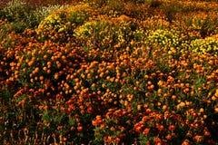 Jardim outonal no Reino Unido Flores, árvores, abóboras, cores fotos de stock royalty free
