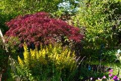Jardim Overgrown Imagem de Stock Royalty Free