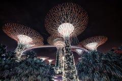 Jardim pelo louro Imagens de Stock Royalty Free