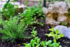 Jardim pequeno Foto de Stock Royalty Free