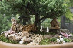 Jardim pequeno ascendente fechado na bacia fotos de stock royalty free