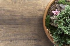 Jardim pequeno da vista superior na bacia fotografia de stock royalty free