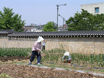 Jardim pequeno do trabalho de Garderns do coreano dentro da parede histórica Fotos de Stock Royalty Free