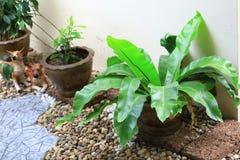 Jardim pequeno na casa, como o fundo da natureza Imagem de Stock Royalty Free