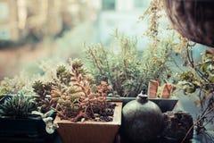 Jardim pequeno no balcão fotografia de stock