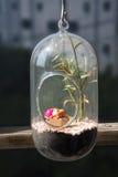 Jardim pequeno no recipiente de vidro Fotos de Stock Royalty Free