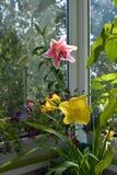 Jardim perfeito no balcão com flores bonitas Esverdeamento por plantas decorativas fotos de stock royalty free