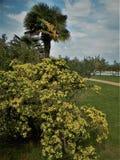 Jardim perto do mar Atmosfera mediterr?nea ideal para a medita? imagens de stock royalty free