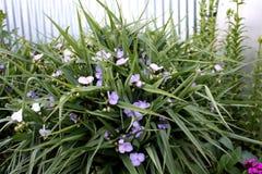 Jardim Plantas de jardim de florescência Flores Fotos de Stock