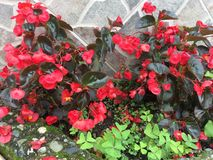 Jardim que explode nas cores e nas texturas fotos de stock royalty free